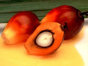 плоды жожоба и масло из них