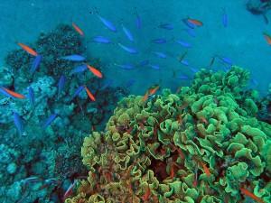 морская капуста на дне моря