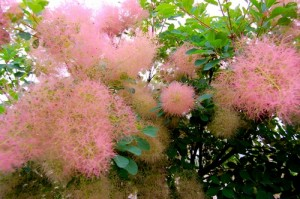сафьяновый лист цветущий