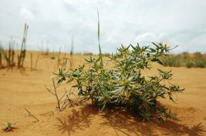 травы для лечения от сахарного диабета