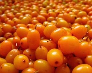 Облепиха крушиновидная ягоды