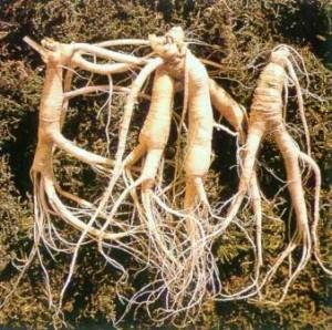 валериана корень