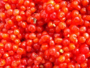 ягоды костяники