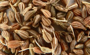 плоды аниса семена