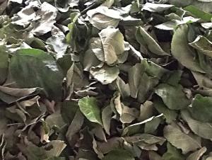 сушеный лист яблони