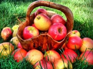 красно-желтые яблоки в корзине