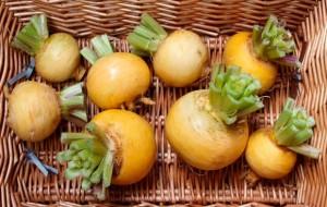 Плоды репы в корзине