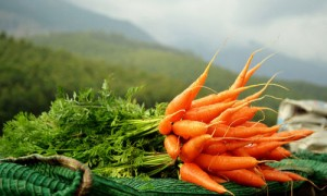 морковь посевная с ботвой