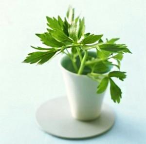 Любисток лекарственный листья в кружке
