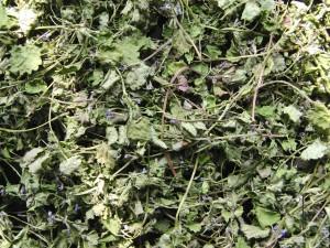 сушеная трава будры