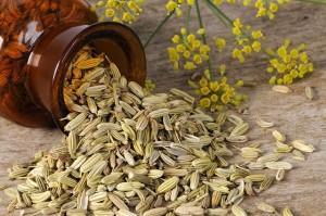 семеная и цветы фенхеля