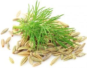 листья и семена фенхеля
