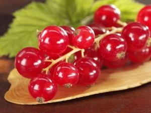 гроздь красной смородины крупный план