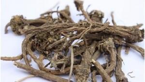корень слюногона лекарственного