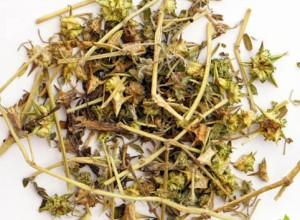 Якорцы стелющиеся сушеная трава