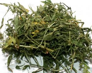 сушеная трава чины луговой