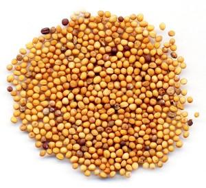 Горчица сарептская семена