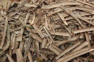 кора осины