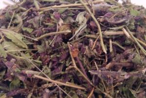 трава дубровника обыкновенного сушеная