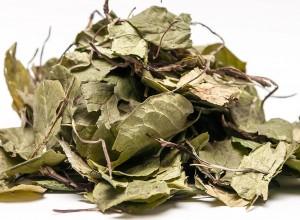 Грушанка круглолистная сушеные листья