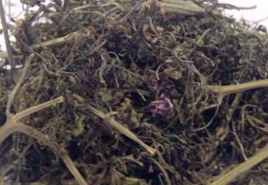 Дымянка лекарственная сушеная трава