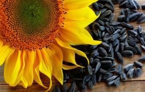 Подсолнечник однолетний цветок и семечки