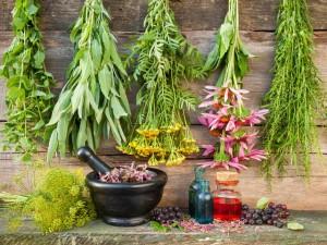 Заготовка лекарственных растений