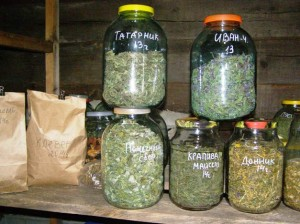 хранение трав в банках и пакетах