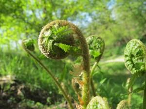 оляк весной в лесу