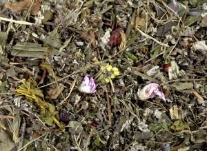 сердечный сбор трав при аритмии