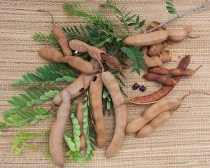 Тамаринд индийский плоды и листья