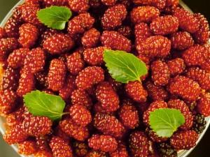 Плоды шелковицы в миске