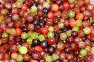 Собранные ягоды крыжовника разного цвета