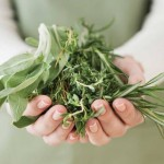 Лекарственные растения для лечения псориаза