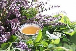 Белокудренник черный настой в чашке и цветы