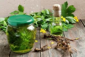 Корни и трава чистотела