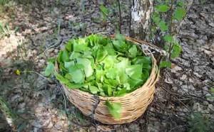 Березовые листья в корзине