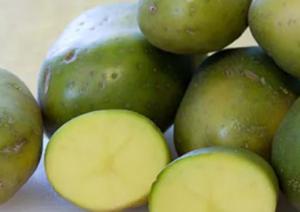 Зеленый картофель для компресса при артрите