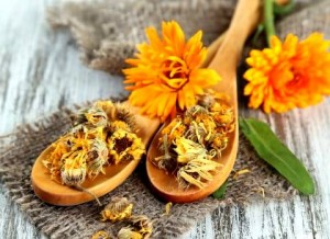 Свежие и сушеные цветки календулы