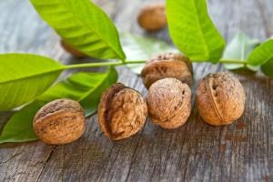 Ветка грецкого ореха с листьями и плодами