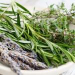 Лекарственные травы от мужского бесплодия