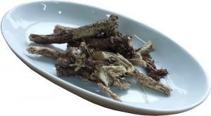 Вздутоплодник сибирский корень сушеный