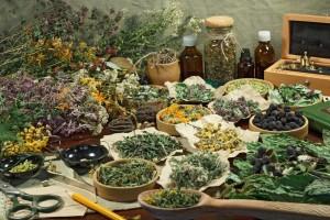 Лекарственные растения при отравлении