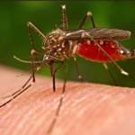Помощь растений при укусах насекомых
