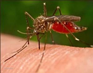 Укус комара помощь