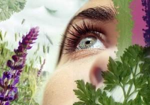 Травяной сбор для глаз