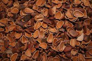 Скорлупа кедровы орехов