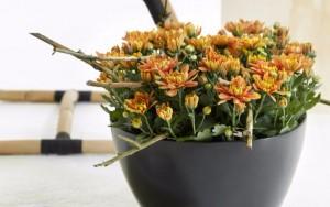 Соцветия хризантемы в пиале