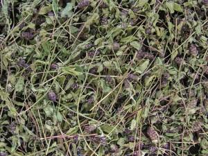 Черноголовка обыкновенная сушеная трава