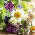 Лекарственные растения в букете